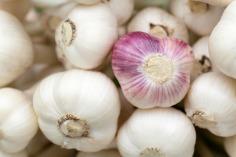 garlic-84691_1920